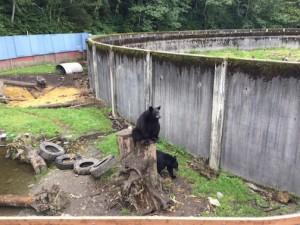 BearFortress_Bandit 2015