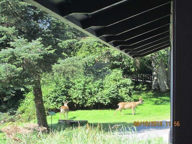 Deer in park 3