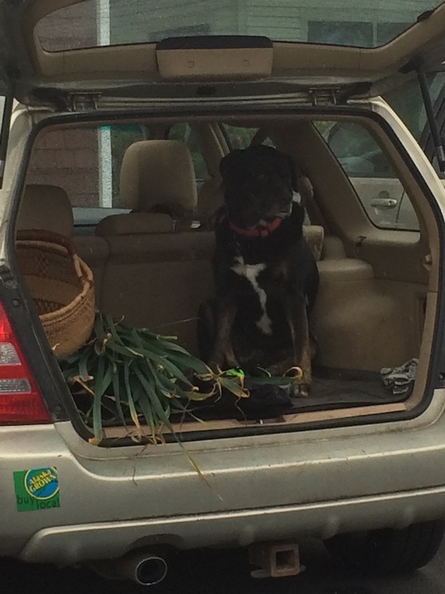 Dog in back of car at See House
