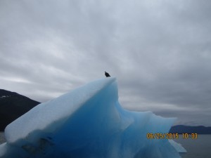 Eagle on the Glacier
