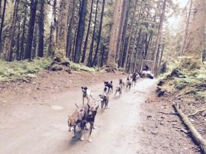 Juneau Dog Sledding