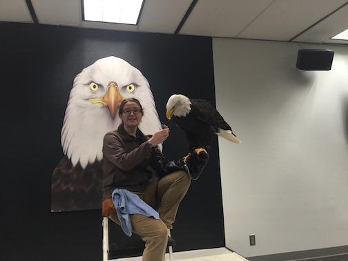 Sitka Raptor Center Eagle